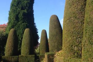 Topiary at Hidecote House
