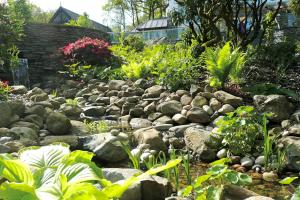 Stream side planting with hosts and ferns