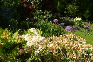 Rhododendrons and alliums